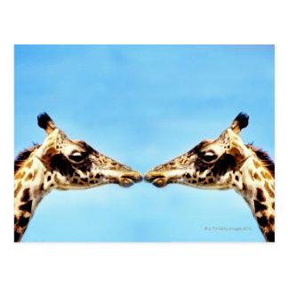 Giraffes touching noses postcard