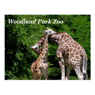 Giraffes @ Woodland Park Zoo Postcards