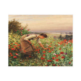 Girl Picking Poppies Canvas Gallery Wrapped Canvas