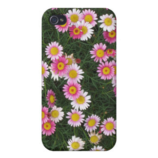 Girly Pink Daisy Flowers iPhone 4/4S Case