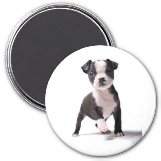Give Me Your Paw Boston Puppy Magnet