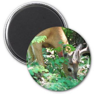 Glacier Deer 6 Cm Round Magnet