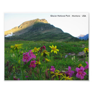 Glacier National Park Wildflowers 8x10 Print Photograph