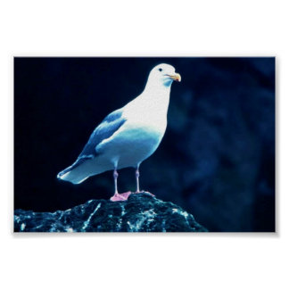 Glacous Winged Gull Print