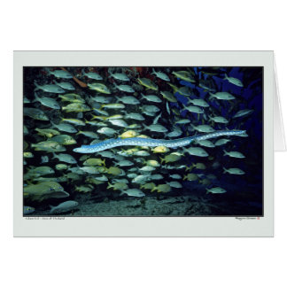 Glass Eel - Sea of Thailand Card