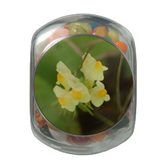 Glass Jelly Bean (TM) Wildflower Candy Jar Jelly Belly Candy Jars