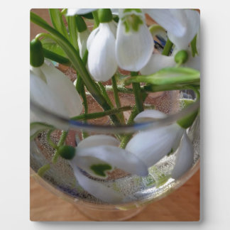 glass of snowdrops display plaques