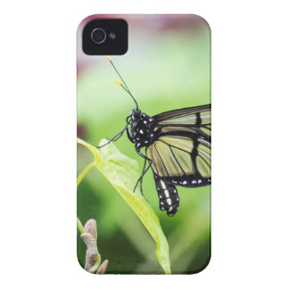 Glass Wing Butterfly Case-Mate iPhone 4 Case