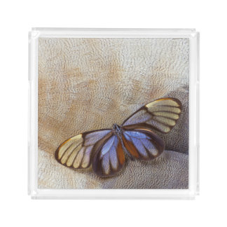 Glass-wing Butterfly Egyptian Goose Feather Acrylic Tray