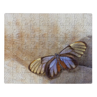 Glass-wing Butterfly Egyptian Goose Feather Jigsaw Puzzle