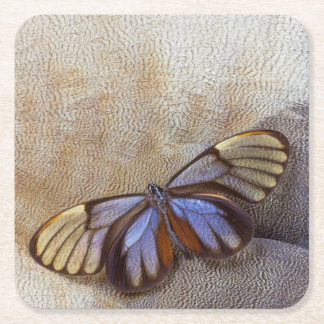 Glass-wing Butterfly Egyptian Goose Feather Square Paper Coaster
