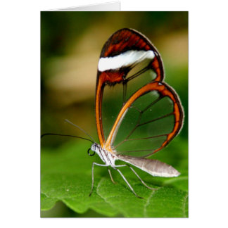 Glass Wing Card