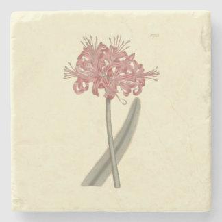 Glaucous Leaved Amaryllis Botanical Illustration Stone Coaster