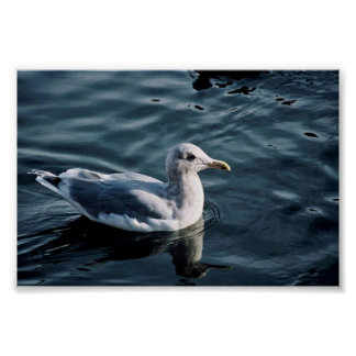 Glaucous-winged Gull Print