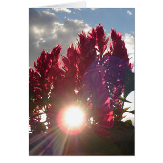 Glebe Reading Garden: Flame Flowers at Sunset Card