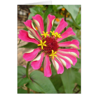 Glebe Reading Garden: Multicolor Zinnia Card