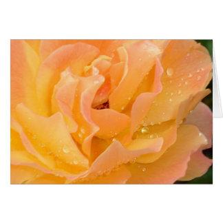Glebe Reading Garden: Raindrops on Roses Card