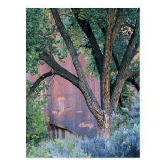 Glen Canyon National Recreation Area, Utah. USA. Postcard