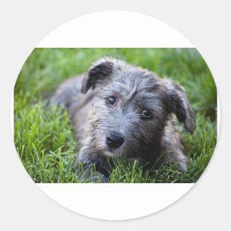 glen of imaal puppy.jpg round sticker