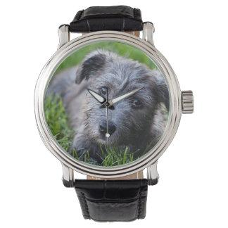 glen of imaal puppy watch