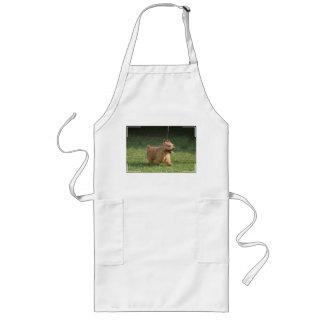 glen-of-imaal-terrier-10.jpg long apron