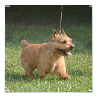 glen-of-imaal-terrier-10.jpg invitation
