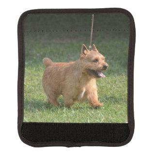 glen-of-imaal-terrier-10.jpg handle wrap