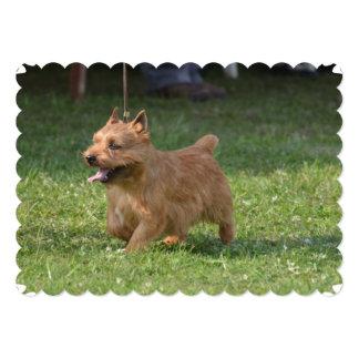 Glen of Imaal Terrier 13 Cm X 18 Cm Invitation Card