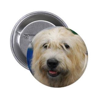 glen-of-imaal-terrier-7 jpg pinback button