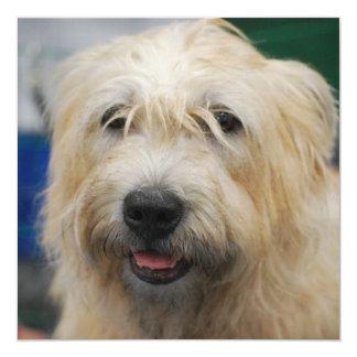glen-of-imaal-terrier-7.jpg custom invitations