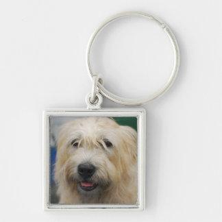 glen-of-imaal-terrier-7.jpg keychain