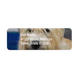 glen-of-imaal-terrier-7.jpg return address label
