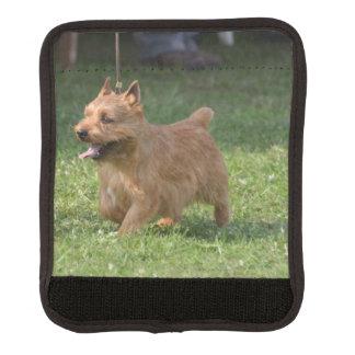 glen-of-imaal-terrier-9.jpg handle wrap