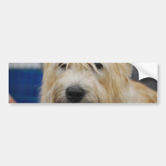 Glen of Imaal Terrier Bumper Sticker Car Bumper Sticker