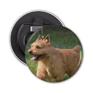 Glen of Imaal Terrier Dog