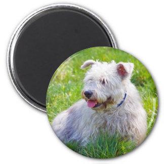 Glen of Imaal Terrier dog fridge magnet, gift 6 Cm Round Magnet