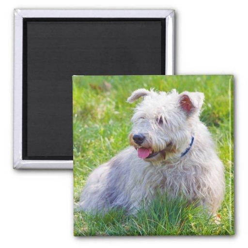 Glen of Imaal Terrier dog fridge magnet, gift idea