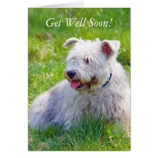 Glen of Imaal Terrier dog get well soon card
