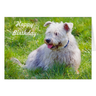 Glen of Imaal Terrier dog happy birthday card
