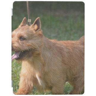 Glen of Imaal Terrier Dog iPad Cover