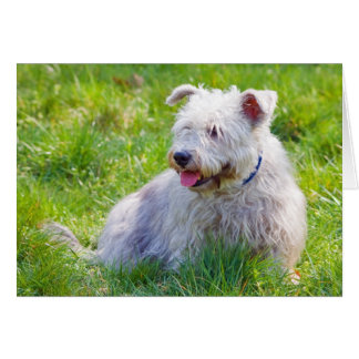 Glen of Imaal Terrier dog nootelet, note card