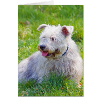 Glen of Imaal Terrier dog notelet, note card