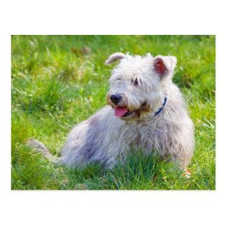 Glen of Imaal Terrier dog postcard