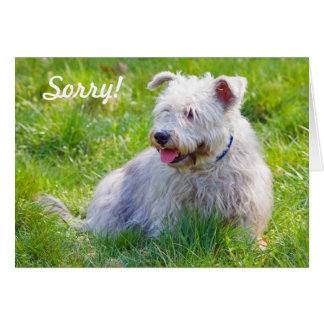 Glen of Imaal Terrier dog sorry greeting card