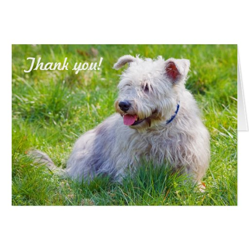 Glen of Imaal Terrier dog thank you greeting card