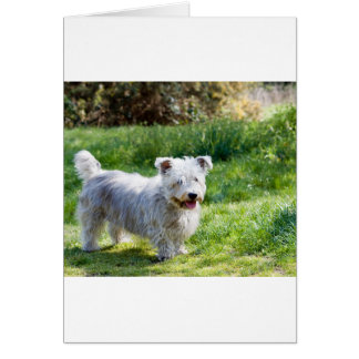 glen of imaal terrier full.png card
