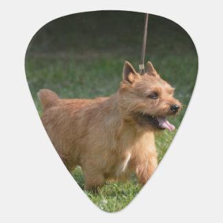 Glen of Imaal Terrier Plectrum