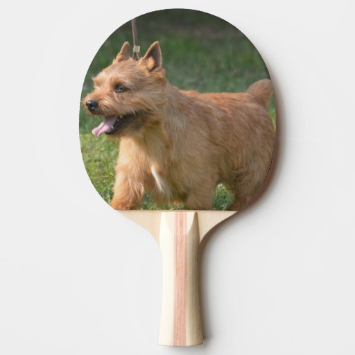 Glen of Imaal Terrier Ping-Pong Paddle