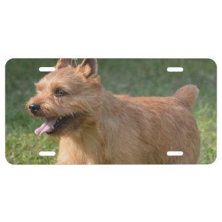 Glen of Imaal Terrier License Plate