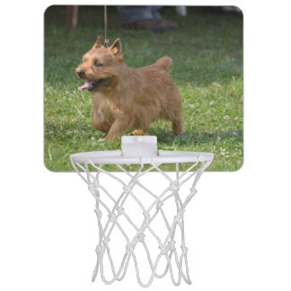 Glen of Imaal Terrier Mini Basketball Backboards